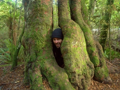 Robby hiding at Catlins Forest Park
