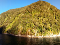 A beautiful day for cruising Milford Sound