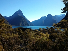 View of Milford Sound from behind the visitor's center