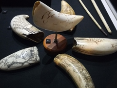 Scrimshaw made from sperm whale teeth; Southland Museum