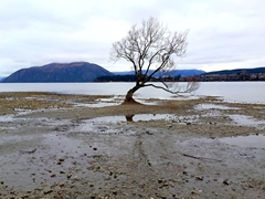 The lone tree of Lake Wanaka, one of the most photographed trees in all New Zealand