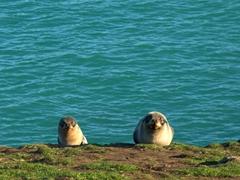 Fur seals at Katiki Point Lighthouse