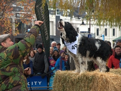 Dog barking competition; Queenstown Winter Festival
