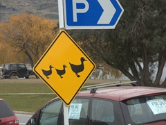Yield to ducks sign; Wanaka
