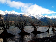 Row of stranded willow trees; Glenorchy