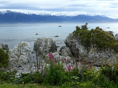 Kaikoura's pretty coastline