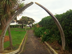 Seaside garden with whale bone arches; Kaikoura