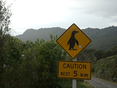 Yield to penguins for the next 5 km!