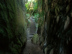 Limestone gully at Grove Scenic Reserve