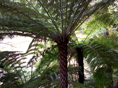 Tree fern; Abel Tasman National Park