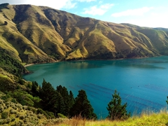 View on the drive to Bulwer Bay; Marlborough Sounds