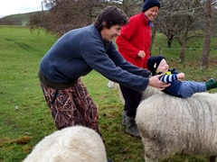 Zane enjoying his first sheep riding experience thanks to a little help from Goodie; Rangiwahia Farm Stay
