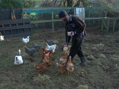 Robby feeding the chickens; Rangiwahia Farm Stay