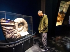 Robby checking out a pre-historic giant nautilus; Te Papa Museum