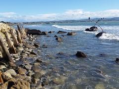 Rocky coastline; Napier