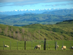 View on our journey from Porangahau to Waipukurau