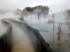 Boardwalk leading over a geothermal pond; Kuirau Park