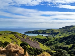 Coromandel peninsula views