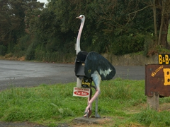 Ostrich mailbox; Waitomo Big Bird Bed & Breakfast