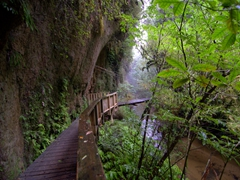 Walkway to Mangapohue Natural Bridge