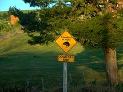 """Dogs kill kiwi"" caution sign; Northland"