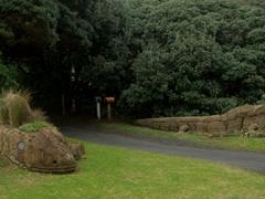 Tuatara driveway; North Piha