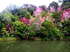 View on our hike to Wharepuke Waterfall; Kerikeri
