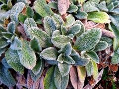 Plant display at Quarry Gardens; Whangarei