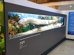 Display case of an oarfish, the longest of all fish; Jeju Natural History Museum