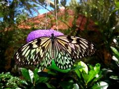 Butterfly Garden; Bohol