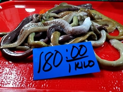 Eels for sale; Tabilaran Public Market