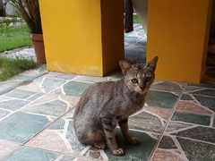 Friendly cat at G&A Apartments; Tagbilaran