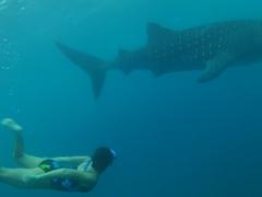 Becky admiring a whale shark