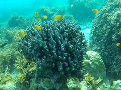 Lots of good snorkeling around Panglao