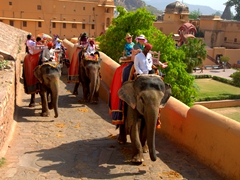 Bob and Ann enjoying their elephant ride up to Amber Fort