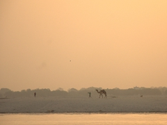 Camel rides on offer for early morning Varanasi visitors