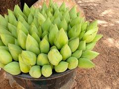 Lotus flowers for sale; Medirigiriya Vatadage