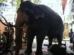 Stuffed elephant; Gangaramaya Temple