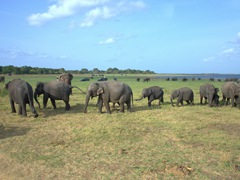 We spent about 2 hours watching the elephants play around at Kaudulla National Park - a highlight of our visit to Sri Lanka!