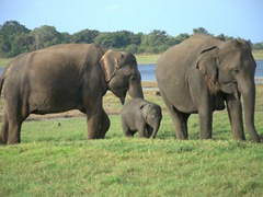 Elephant family portrait