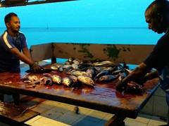 Fishermen slicing up tuna; Dhiggaru Island