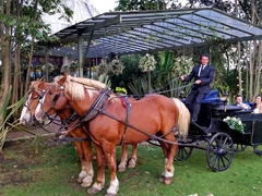 Mafe and Craig get whisked away for wedding photos by horse and carriage!