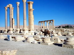 Wherever there are tourists, there will be camel drivers looking for potential customers; Palmyra
