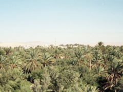 Palmyra is an ancient oasis city (as evidenced by the numerous palm trees). The modern city of Tadmur is off in the distance