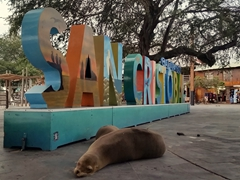 Sleeping sea lions by a San Cristobal sign