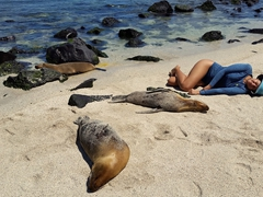 Becky joins the sleepy sea lions for a snooze; Playa Punta Carola