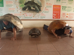 The tortoise shells are super heavy! Trying our best to imagine life as a tortoise