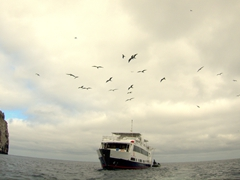 Frigate birds hoping to score some food fly above the Humboldt Explorer; Darwin's Island