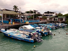 Boats lined up near the fish market; Puerto Ayora