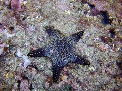 Starfish; Cousin's Rock